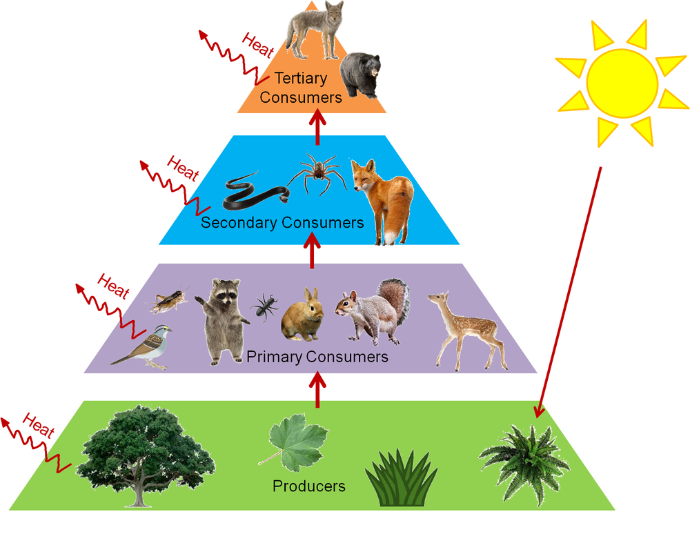what are the three tropic levels Posts about trophic levels written by tgiq i am pretty excited by the next step i'm taking with one of my projects.